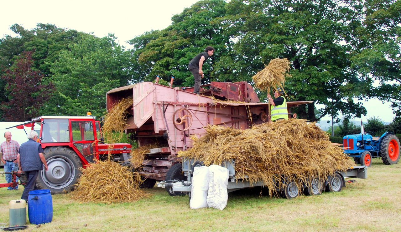 The Threshing Mill at work in Dualla—29/8/2021
